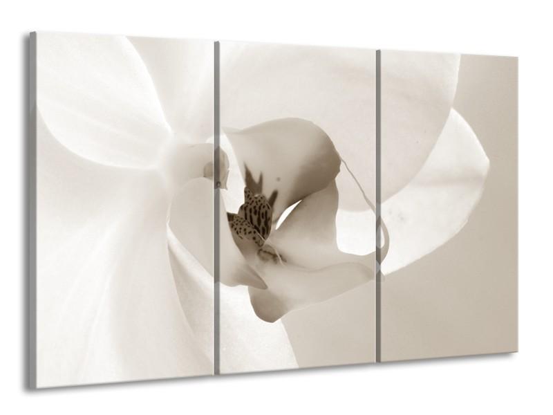 Glasschilderij Bloem | Sepia | 165x100cm 3Luik