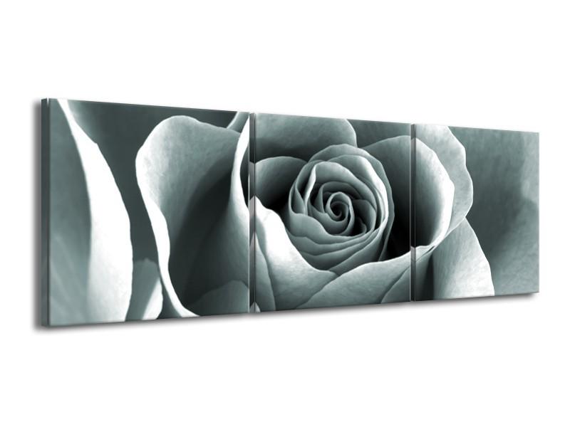 Canvas Schilderij Roos, Bloem | Grijs, Zwart, Groen | 150x50cm 3Luik