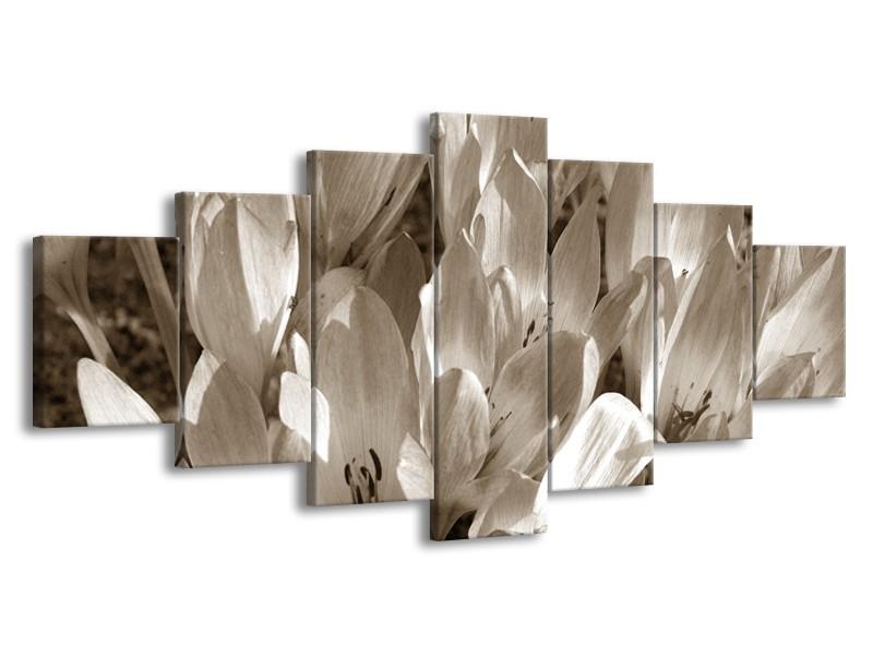 Glasschilderij Bloemen, Krokus | Sepia | 210x100cm 7Luik