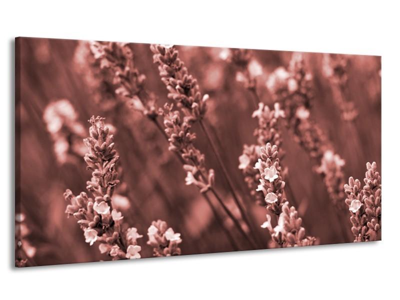 Canvas Schilderij Bloemen, Lente   Bruin, Rood   170x90cm 1Luik
