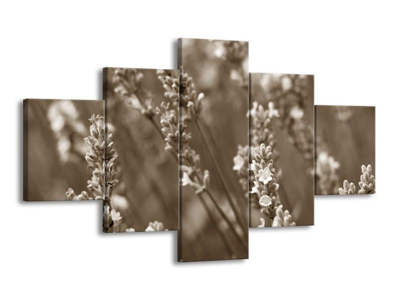 Glasschilderij Bloemen, Lente | sepia | 125x70cm 5Luik