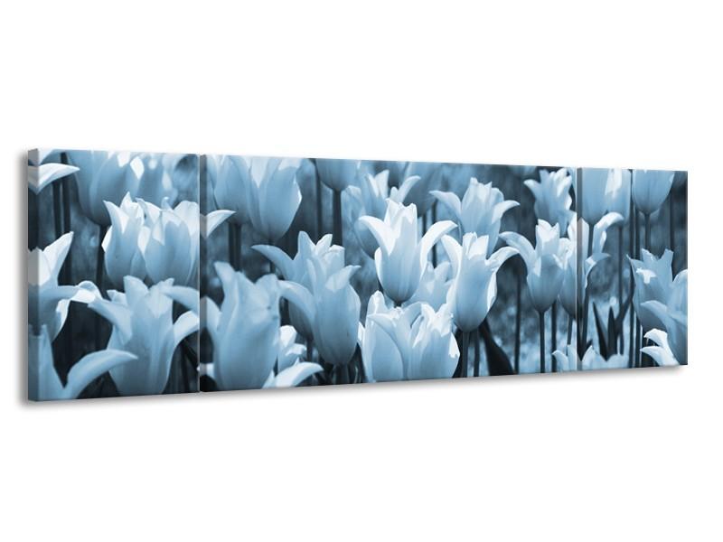 Glasschilderij Tulpen, Bloemen   Blauw, Grijs   170x50cm 3Luik