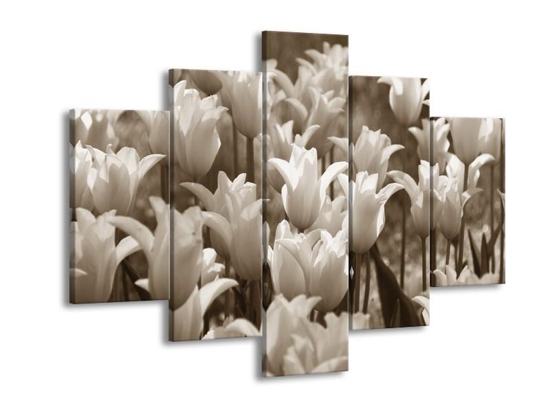 Glasschilderij Tulpen, Bloemen | Sepia | 150x105cm 5Luik
