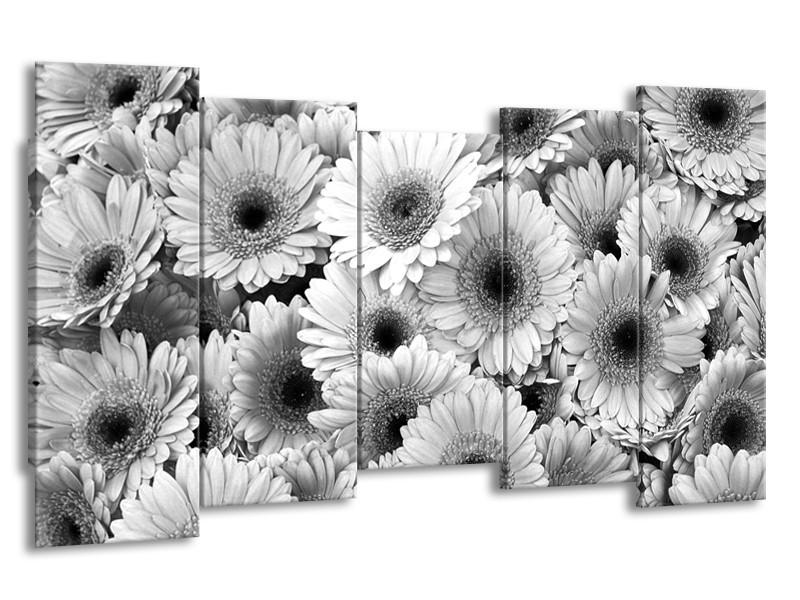 Glasschilderij Gerbera, Bloemen   Zwart, Grijs   150x80cm 5Luik