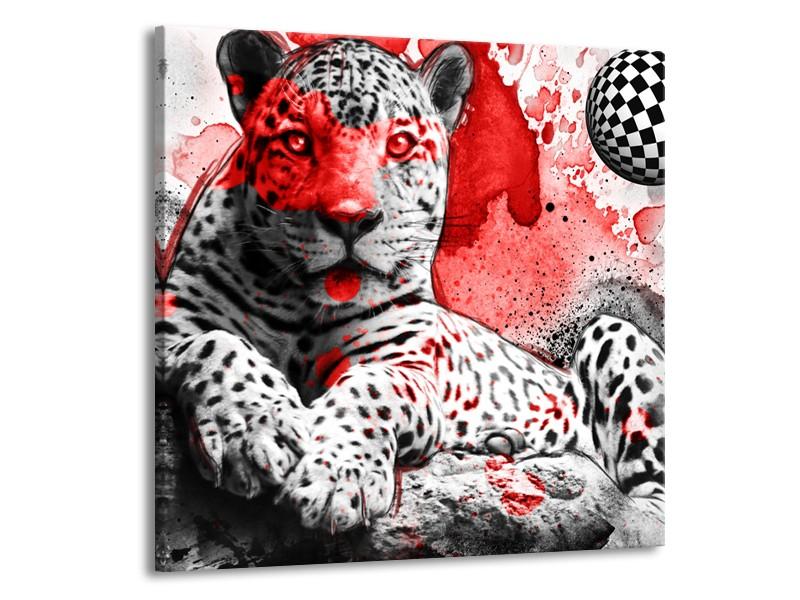 Canvas Schilderij Wilde Dieren   Rood, Grijs, Wit   50x50cm 1Luik