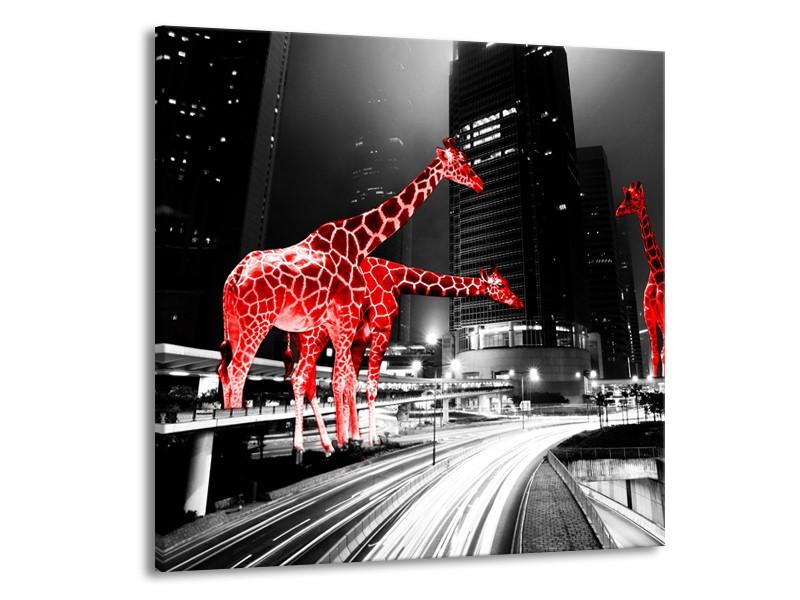 Glasschilderij Steden, Giraffe | Zwart, Wit, Rood | 50x50cm 1Luik