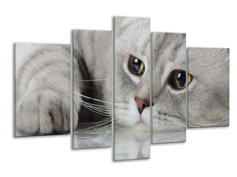 Glasschilderij Kat, Dieren | Grijs, Bruin | 170x100cm 5Luik