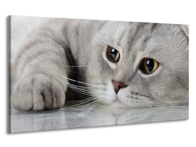 Canvas Schilderij Kat, Dieren   Grijs, Bruin   190x100cm 1Luik