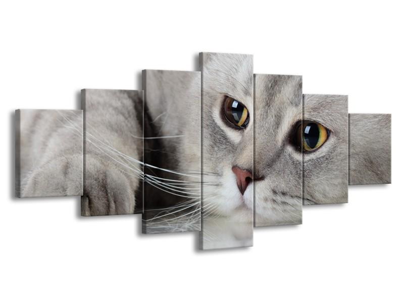 Glasschilderij Kat, Dieren | Grijs, Bruin | 210x100cm 7Luik