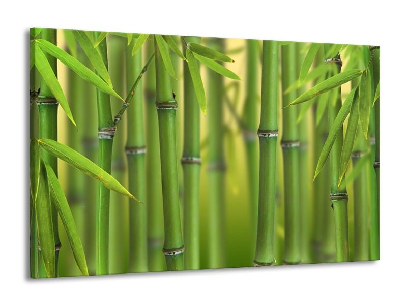 Canvas Schilderij Bamboe, Natuur | Groen, Geel | 140x90cm 1Luik
