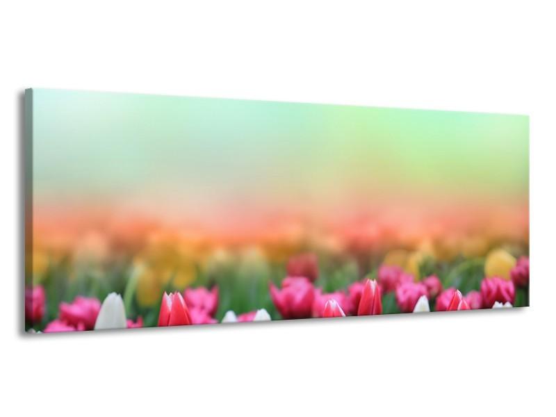 Canvas Schilderij Tulpen, Bloemen   Groen, Roze, Wit   145x58cm 1Luik
