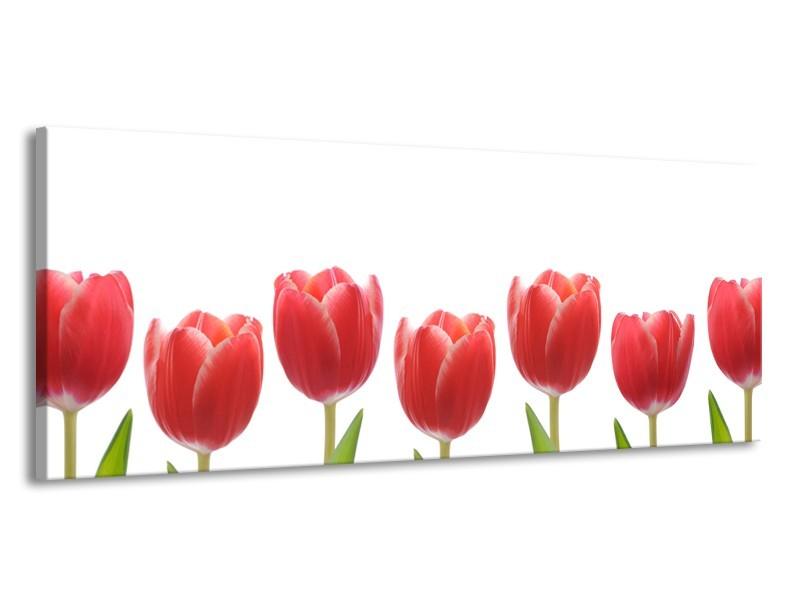Canvas Schilderij Tulpen, Bloemen   Wit, Rood, Groen   145x58cm 1Luik