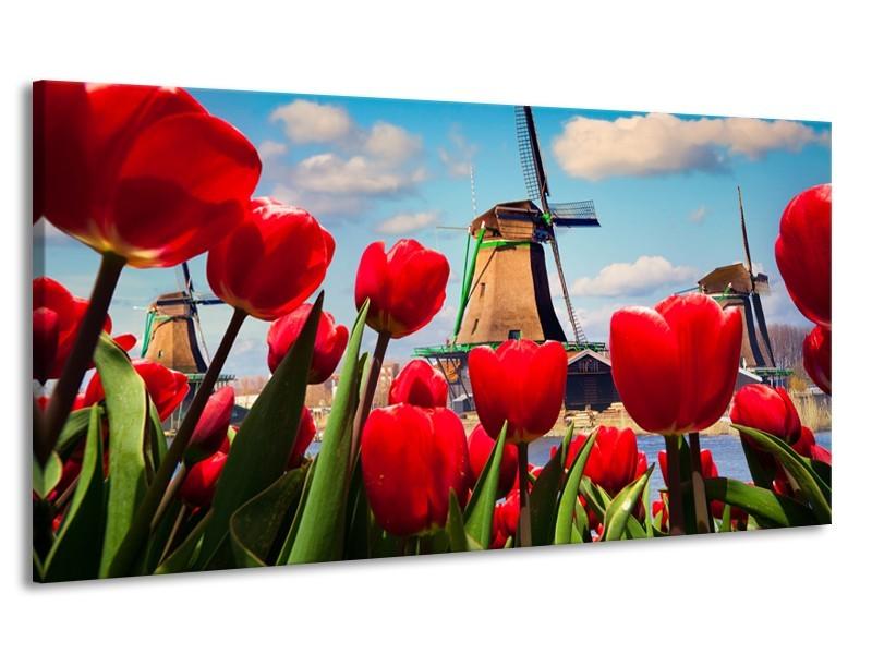 Canvas Schilderij Tulpen, Molen | Rood, Blauw, Grijs | 170x90cm 1Luik