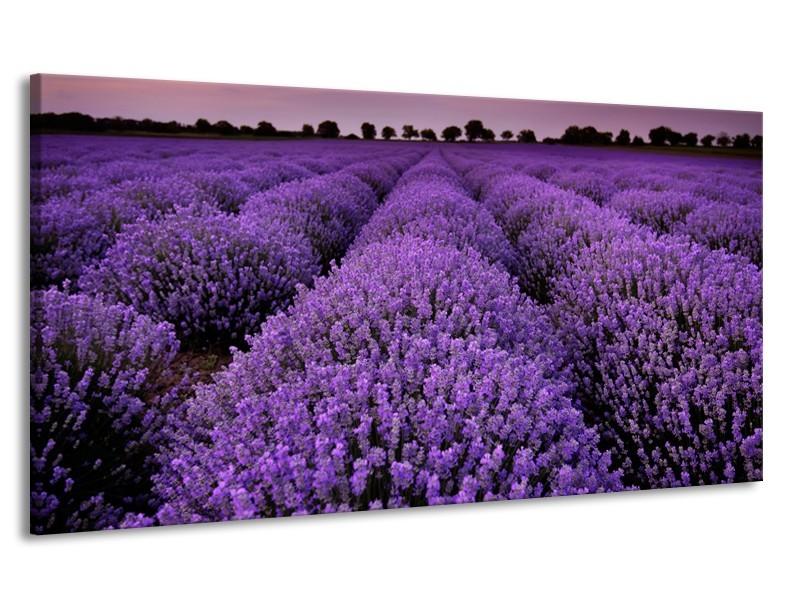 Canvas Schilderij Lavendel, Landelijk | Paars | 170x90cm 1Luik