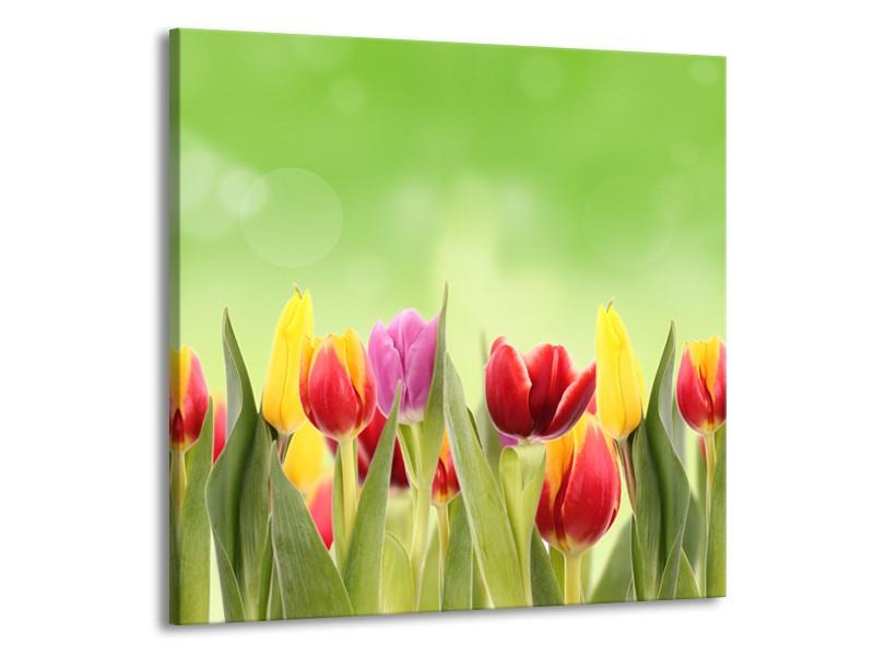 Glasschilderij Tulpen, Bloemen   Groen, Rood, Geel   70x70cm 1Luik