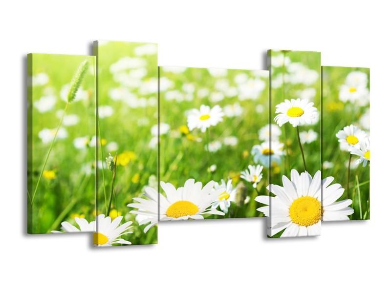 Glasschilderij Madeliefje, Bloemen   Groen, Wit, Geel   120x65cm 5Luik