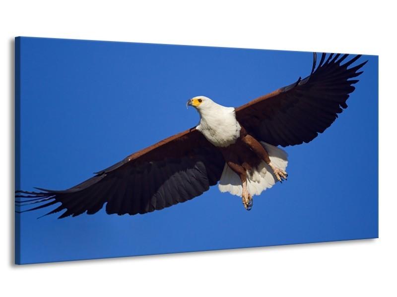 Canvas Schilderij Adelaar, Vogel | Blauw, Wit, Zwart | 170x90cm 1Luik