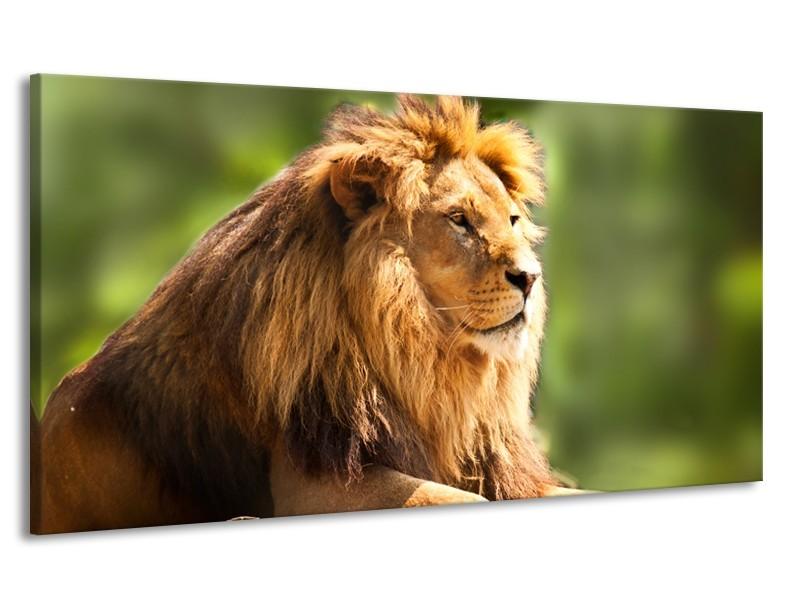 Canvas Schilderij Leeuw, Dieren | Bruin, Groen | 170x90cm 1Luik