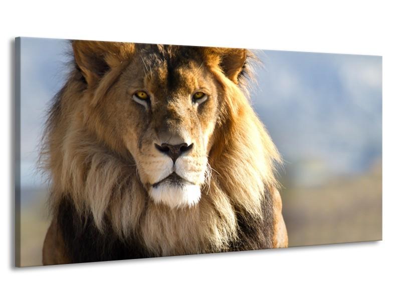 Canvas Schilderij Leeuw, Dieren | Bruin, Blauw, Grijs | 170x90cm 1Luik