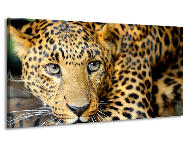 Canvas Schilderij Wilde Dieren | Zwart, Bruin, Geel | 170x90cm 1Luik