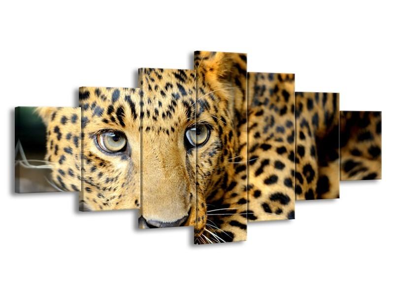 Glasschilderij Wilde Dieren | Zwart, Bruin, Geel | 210x100cm 7Luik