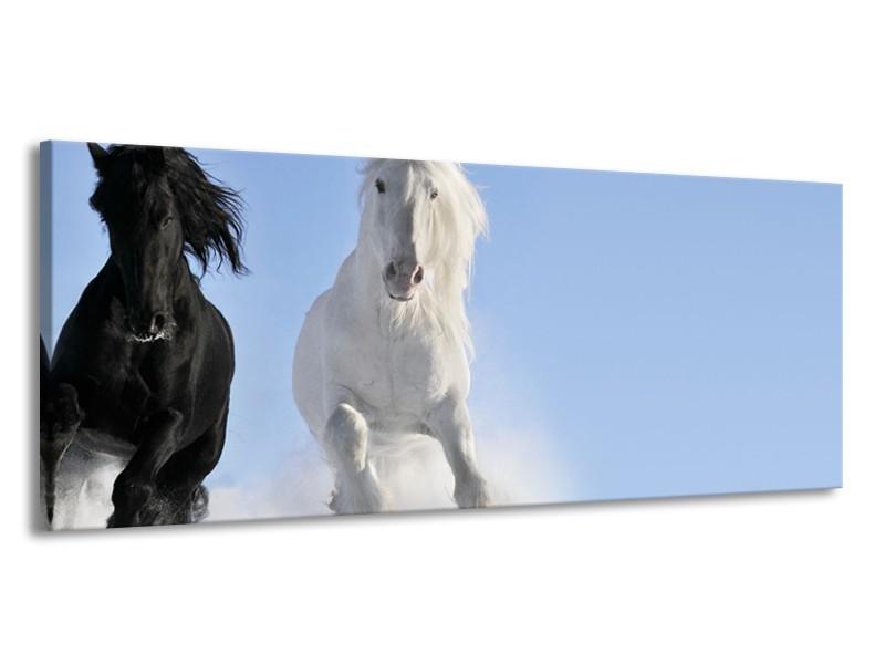 Canvas Schilderij Paard, Dieren | Blauw, Zwart, Wit | 145x58cm 1Luik