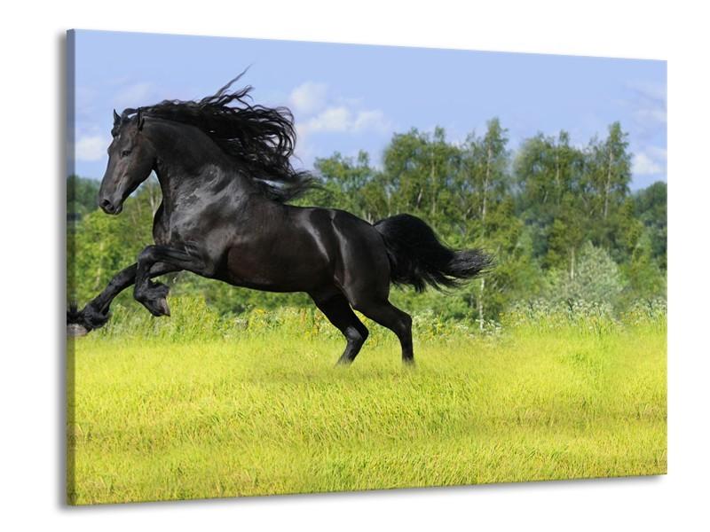 Canvas Schilderij Paard, Dieren   Zwart, Groen   100x70cm 1Luik
