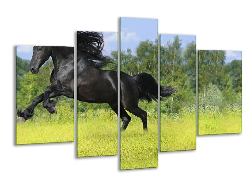 Glasschilderij Paard, Dieren | Zwart, Groen | 170x100cm 5Luik
