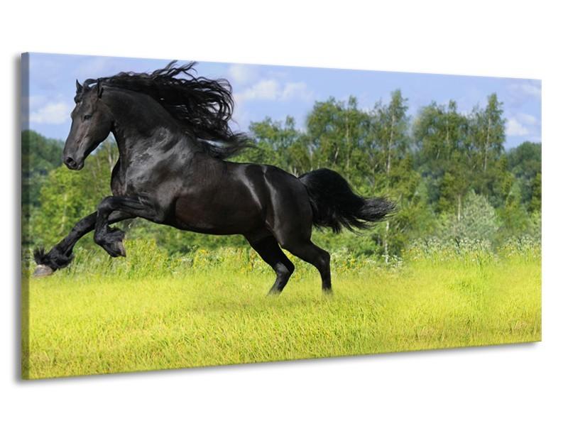 Canvas Schilderij Paard, Dieren | Zwart, Groen | 170x90cm 1Luik