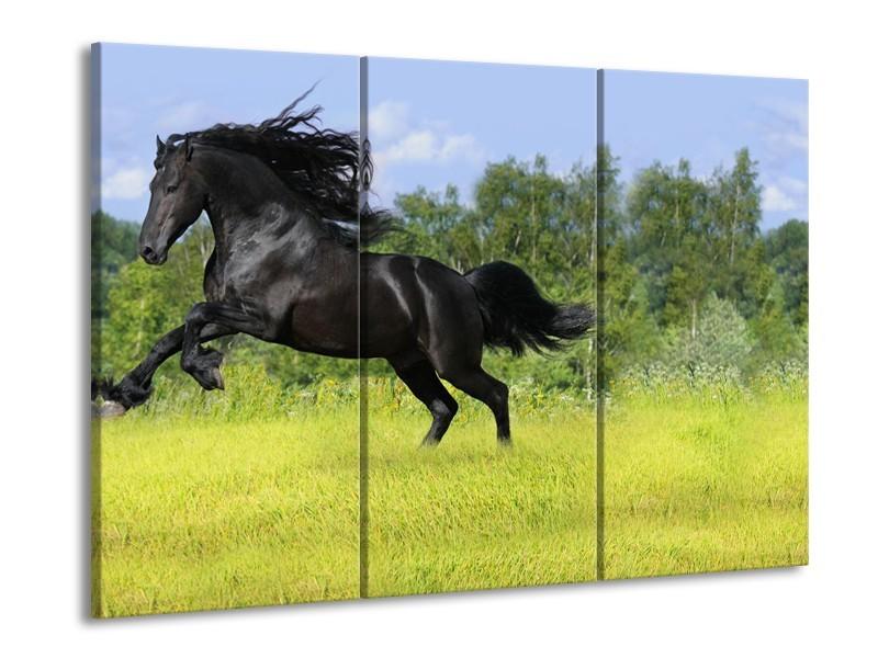 Glasschilderij Paard, Dieren | Zwart, Groen | 60x90cm 3Luik