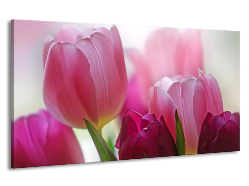 Canvas Schilderij Tulpen, Bloemen | Roze, Paars | 190x100cm 1Luik