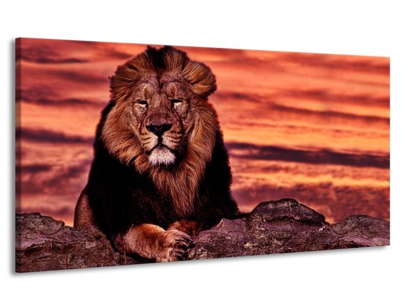 Canvas Schilderij Wilde Dieren | Oranje, Bruin | 170x90cm 1Luik