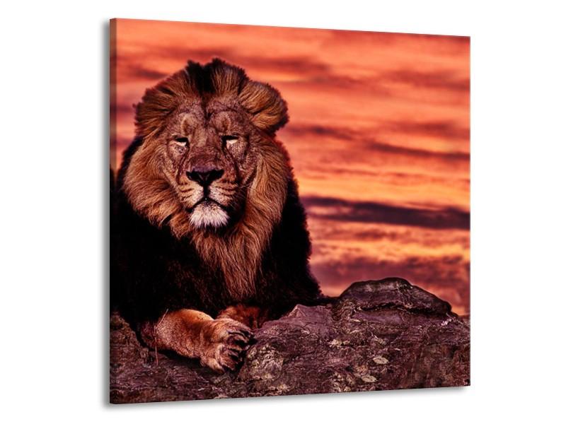 Canvas Schilderij Wilde Dieren | Oranje, Bruin | 50x50cm 1Luik