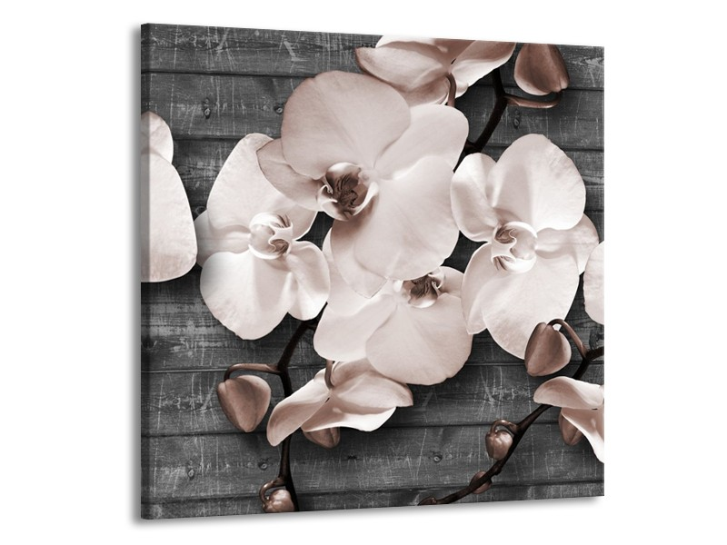 Glasschilderij Orchidee, Bloemen   Grijs   70x70cm 1Luik